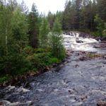 Migracja-zwierzat-wodnych-w-Finlandii-szkolenie