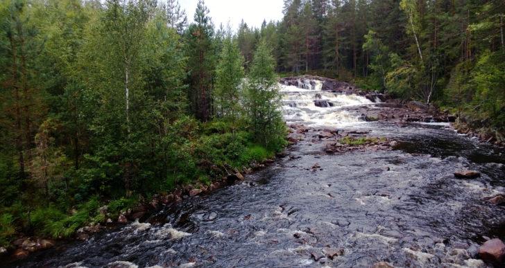 Migracja zwierząt wodnych w Finlandii – szkolenie